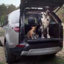 Pet Packs อุปกรณ์เสริมสำหรับพาน้องหมาเดินทางจาก Land Rover